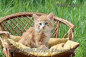 Marek, ANIMALS, REALISTISCHE TIERE, ANIMALES REALISTICOS, cats, photos+++++,PLMP2511,#a#