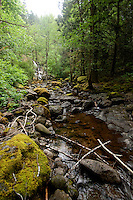 Stream near Sook. Vancouver Island, British Columbia, Canada.