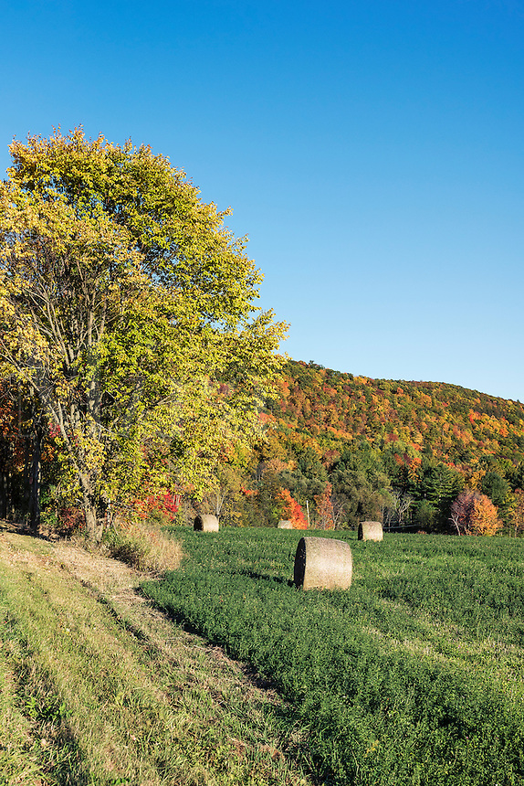 Hay bales in autumn field, Cornwall, Vermont, USA.