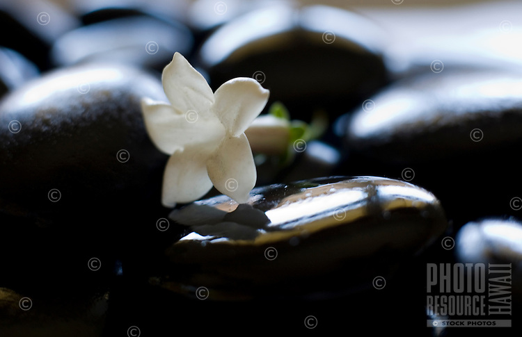 Black pohaku (stones), with a single white Stephanotis floribunda flower; the stones can be used for Lomilomi, or the Hawaiian healing art of massage.