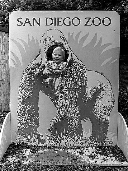 Noah Nelson looking through gorilla cut-out at San Diego Zoo.<br />