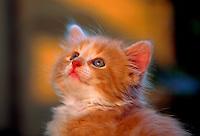 Young kitten.