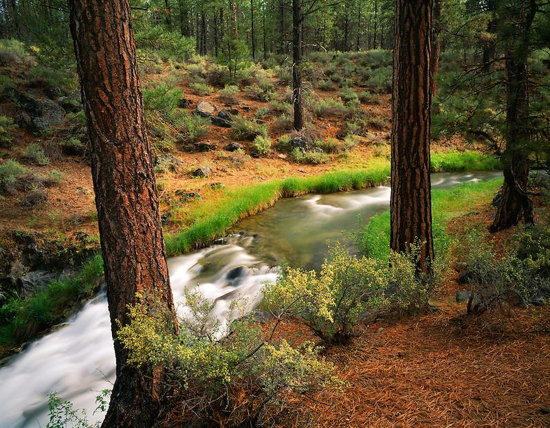 Paulina Creek. Newberry National Volcanic Monument. Oregon.