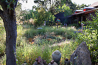 Dappled sunlight in California backyard meadow garden with bunch grasses framed by tree and home, Barbata garden, Walnut Creek, California