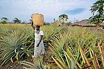 Christine Fatina, a United Methodist, harvests pineapples  on her family's farm in Pisak, Southern Sudan... NOTE: In July 2011, Southern Sudan became the independent country of South Sudan