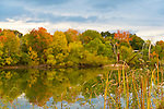 New York, USA. 23rd October 2013. Fall foliage starts to arrive at North Shore of Long Island, with marsh cattails along pond nature decorated with colorful reflections of trees.