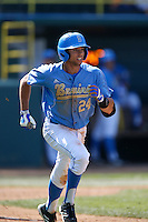Brian Carroll #24 of the UCLA Bruins runs the bases against the California Golden Bears at Jackie Robinson Stadium on March 23, 2013 in Los Angeles, California. (Larry Goren/Four Seam Images)