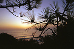 Pacific Ocean Torrey Pines California sunset with pine tree, Torrey Pines California sunset with pine tree in foreground in La Jolla California, sunset, pacific ocean, old tree,old rugged tree, sunset, pacific, Torrey pines, La Jolla California, California Fine Art Photography by Ron Bennett,