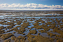 Tidal mud flats on east coast of Coromandel Peninsula, dawn, North Island, New Zealand
