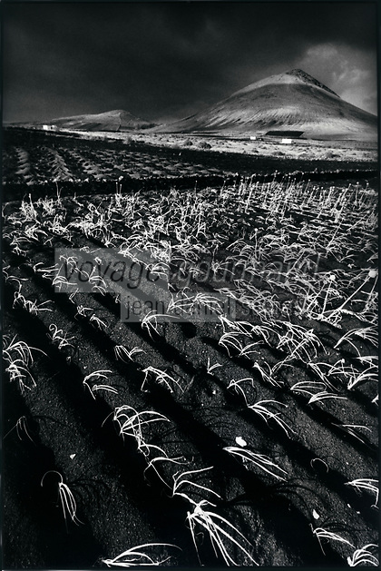 Europe, Espagne, Iles Canaries, Lanzarote:   paysage volcanique et champ d'  oignons // Europe, Spain, Canary Islands, Lanzarote: around Teguise :  Volcanic landscape and onions field