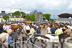 The scene at the Fair Field during the horse fair in Killorglin on Saturday   Copyright Kerry's Eye 2008
