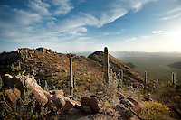 Saguaro National Park in Tucson, Arizona, Tuesday, April 20, 2010. ..PHOTO/ MATT NAGER
