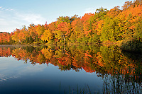 The morning sunlight lighting up a shoreline of trees during the autumn season. Marquette County - Upper Peninsula MI