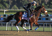 Colonel Joan, trained by Eoin Harty, trains for the Breeders' Cup Juvenile Fillies Turf at Santa Anita Park in Arcadia, California on October 30, 2013.
