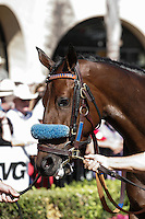 Obviously (IRE) in the Del Mar Mile at Del Mar Race Course in Del Mar, California on August 26, 2012.