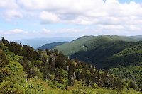 The landscape view of the great smoky mountains range, pine trees and the cloudy sky above.