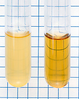 TURBIDITY AN INDICATOR OF  BACTERIAL GROWTH<br />