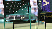 Cameron Norrie (GBR) has a model leopard placed on his seat during his match against Kei Nishikori (JPN) in their Gentleman's Singles Second Round match<br /> <br /> Photographer Rob Newell/CameraSport<br /> <br /> Wimbledon Lawn Tennis Championships - Day 4 - Thursday 4th July 2019 -  All England Lawn Tennis and Croquet Club - Wimbledon - London - England<br /> <br /> World Copyright © 2019 CameraSport. All rights reserved. 43 Linden Ave. Countesthorpe. Leicester. England. LE8 5PG - Tel: +44 (0) 116 277 4147 - admin@camerasport.com - www.camerasport.com