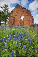 On a spring afternoon, bluebonnets ride the breeze in front of an old building in Pontotoc, Texas. Each spring around this site, bluebonnets and other Texas wildflowers share their color in an explosion of blue and pink.