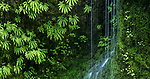 Columbia River Gorge, Oregon, waterfall and maidenhair ferns