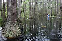 GA, Okefenokee National Wildlife Refuge