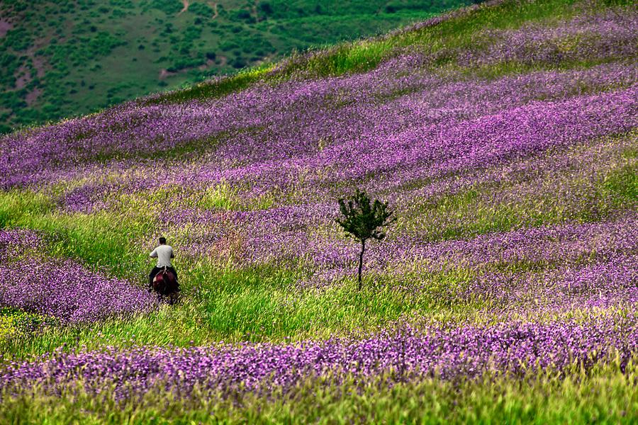 Azerbaijan, Lerik District, June 1, 2011<br /> A local man rides a horse through a field of wild flowers in the foothills of the mountain in Lerik, a district in southern part of Azerbaijan, near the Iranian border. This mountainous area has earned a reputation as the &ldquo;home of people who live to a great age.&rdquo;<br /> <br /> Azerba&iuml;djan, district de Lerik, 1er juin 2011 <br /> Un homme du district de Lerik monte &agrave; cheval dans un champ de fleurs sauvages, &agrave; flanc de collines. Situ&eacute; pr&egrave;s de la fronti&egrave;re iranienne dans le sud de l&rsquo;Azerba&iuml;djan, ce district montagneux est connu comme &eacute;tant &laquo; la terre de ceux qui vivent &acirc;g&eacute;s &raquo;.<br /> <br /> Distribution HEMIS