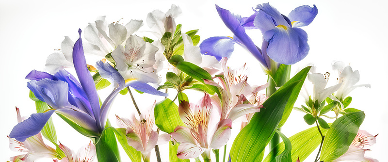 Alstroemeria,iris and azaleas close up.