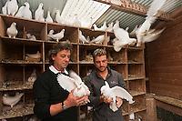 Europe/France/Pays de la Loire/44/Loire Atlantique/Ile de Fedrun/Saint-Joachim: Eric Guerin chef du restaurant: La Mare aux Oiseaux  chez Rémy Anézo, éleveur de pigeons: Les Pigeons de Mesquer  // France, Loire Atlantique, Ile de Fedrun, Saint Joachim, chef Eric Guerin, La Mare aux Oiseaux and Remy Anezo, breeder of pigeons Pigeons Mesquer  <br /> <br /> [Non destiné à un usage publicitaire - Not intended for an advertising use]