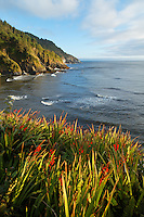 Red wildflowers overlooking the rugged Oregon Coast, Oregon, USA, North America
