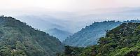 Misty Choco Cloud Forest, Ecuador, South America