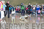 The two seals make a dash for the ocean after being releases at Rossbeigh beach on Saturday.