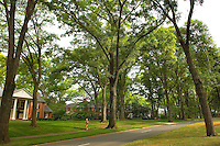 A woman runs' down Queens Road West in the Myers Park neighborhood in Charlotte, NC. Myers Park is one of the premier neighborhoods in North America and known for its large canopy of trees.