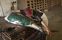 The tuna is measured and kept moist before final weigh.