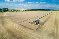 Claas Lexion combine harvesting winter wheat - Lincolnshire, August
