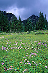 Wildflowers and storm clouds, summer, Weminuche Wilderness, San Juan National Forest, Colorado