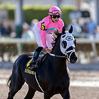HALLANDALE BEACH, FL - MAR 3:Hogy #6 trained Michael J. Maker with Irad Ortiz, Jr. in the irons prepares to run and win the $150,000 Canadian Turf Stakes (G3) at Gulfstream Park on March 3, 2018 in Hallandale Beach, Florida. (Photo by Bob Aaron/Eclipse Sportswire/Getty Images)