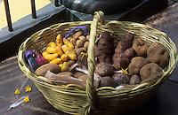 Amérique/Amérique du Sud/Pérou/Lima : Pays d'origine de la pomme de terre - Différents tubercules