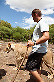 MAURITIUS, Flic en Flac, a tourist walks side by side with a lioness at Casela Nature and Leisure Park in western Mauritius