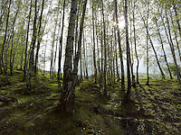 FOREST_LOCATION_90025