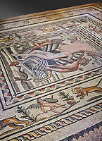 Roman mosaics - Birth of Aphrodite (Venus) Mosaic.  Poseidon Villa Ancient Zeugama, 2nd - 3rd century AD . Zeugma Mosaic Museum, Gaziantep, Turkey.  Against a grey background.