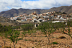 Fruit trees growing in farmland, village of Uleila del Campo, Almeria, Spain