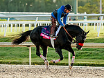 January 24, 2020: Next Shares jogs as horses prepare for the Pegasus World Cup Invitational at Gulfstream Park Race Track in Hallandale Beach, Florida. Scott Serio/Eclipse Sportswire/CSM