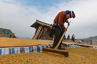 Asia,China,Danzhai,Ma Niao, farmers , minority