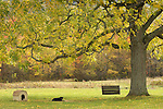 Dog with doghouse, swing, and large walnut tree in fall.