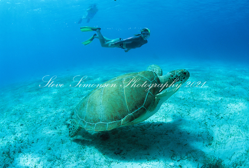 Snorkeler and Green Sea Turtle<br /> Leinster Bay<br /> Virgin Islands National Park<br /> St. John, Virgin Islands