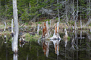 "Wetlands near the old ""Depot Camp"" location along Livermore Road in Waterville Valley, New Hampshire. Depot Camp was a logging camp used during the Mad River logging era."