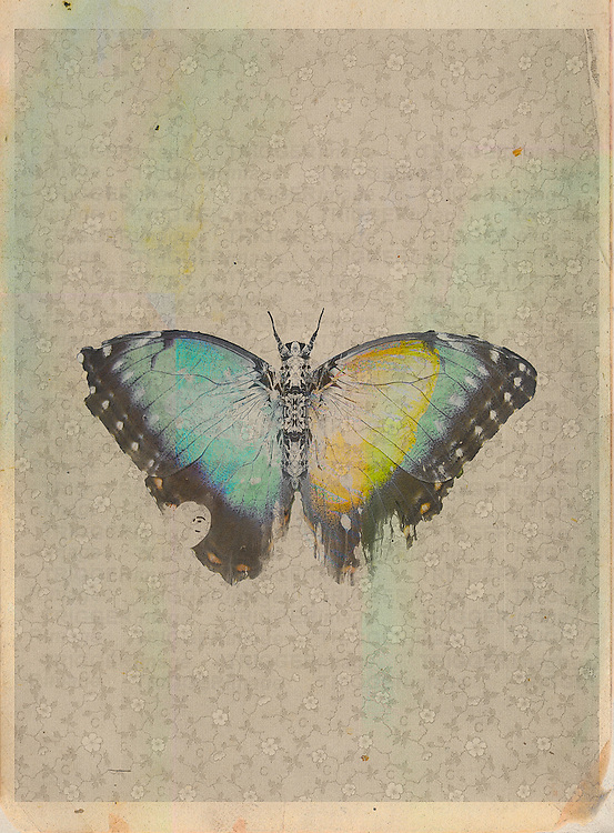 Colorful vintage butterfly