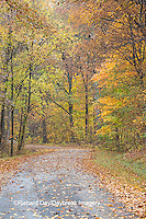 63876-02202 Road in fall, Stephen A. Forbes State Park, Marion Co., IL