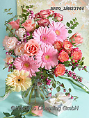 Alfredo, FLOWERS, BLUMEN, FLORES, photos+++++,BRTOLMN23764,#f#, EVERYDAY ,rose,roses