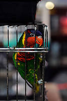 A Lory for sale at the Noah Inner City Zoo - a pet shop that sells exotic animals. The Zoo claims to have more than 300 species for sale, many are exotic and rare animals - some endangered.